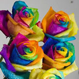 multi-colored-roses-rainbow-globalrose-t